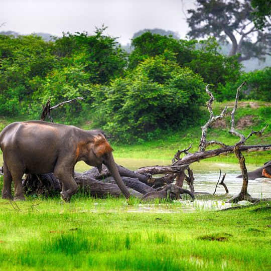 http://pearlgrouphotels.com/wp-content/uploads/2016/07/elephant-wilpattu-national-park-540x540.jpg
